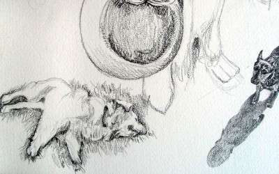 a detail from a pencil drawing of my dog Eni and his best friend Lucca