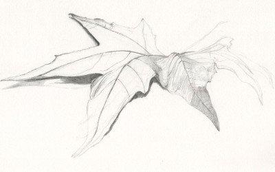 leafMT