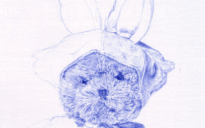 Biro drawing unfinished, detail