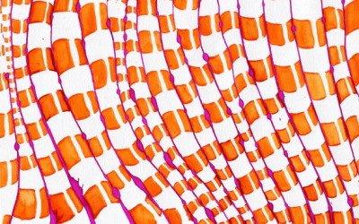 orangemonkeysfast_recorte